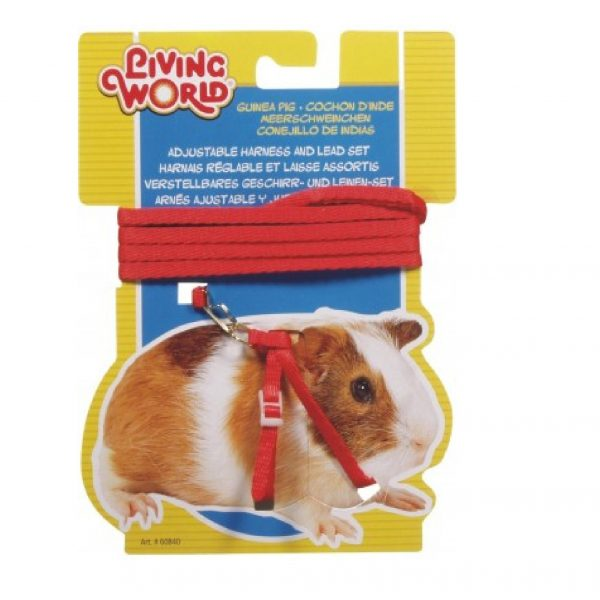 Guinea Pig harness red